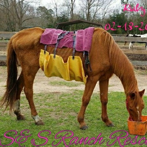 Guldmann Repositioning sling help save the lives of the horses at S&S Ranch Rescue
